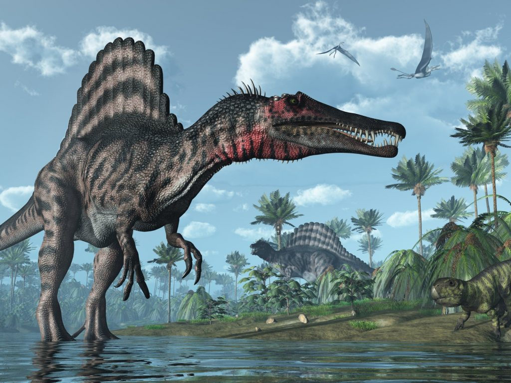 Spinosaurus were well-adapted to life in and out of water, palaeontologists have recently learned