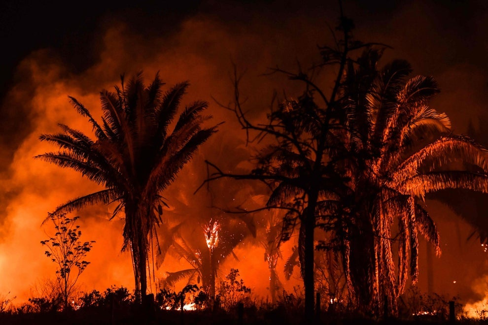 Huge tracts of the Amazon rainforest are being burned by loggers and farmers, exacerbating losses from climate change