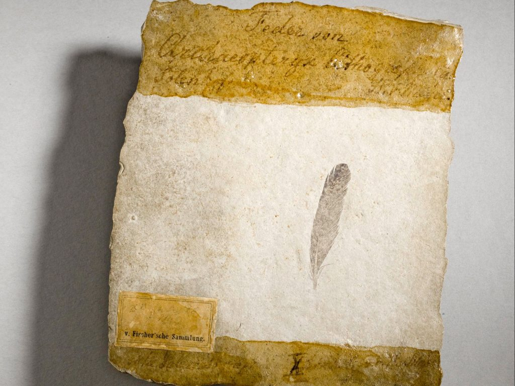 "The controversial 150 million-year-old fossil feather, housed at the Museum für Naturkunde in Berlin, Germany. The name ""Archaeopteryx lithographica"" was coined and assigned to this fossil on 30 September 1861."