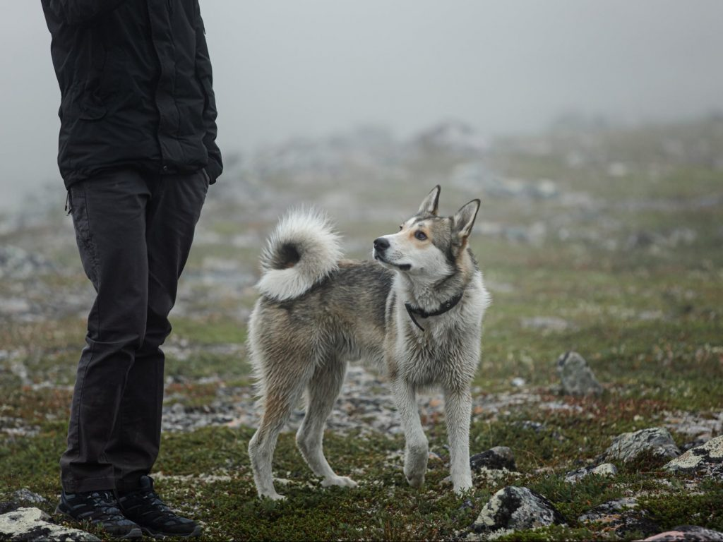 The precise origin of man's relationship with dogs 'remains shrouded in mystery'