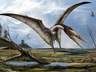 An artists impression  issued by Davide Bonadonna of the North African Alanqa, which paleantologists say looks similar to the newly discovered species of pterosaur