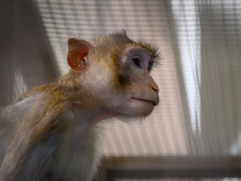 <p>27 monkeys were put to death at Ames research center in California's Silicon Valley last year, a report by the Guardian has claimed</p>