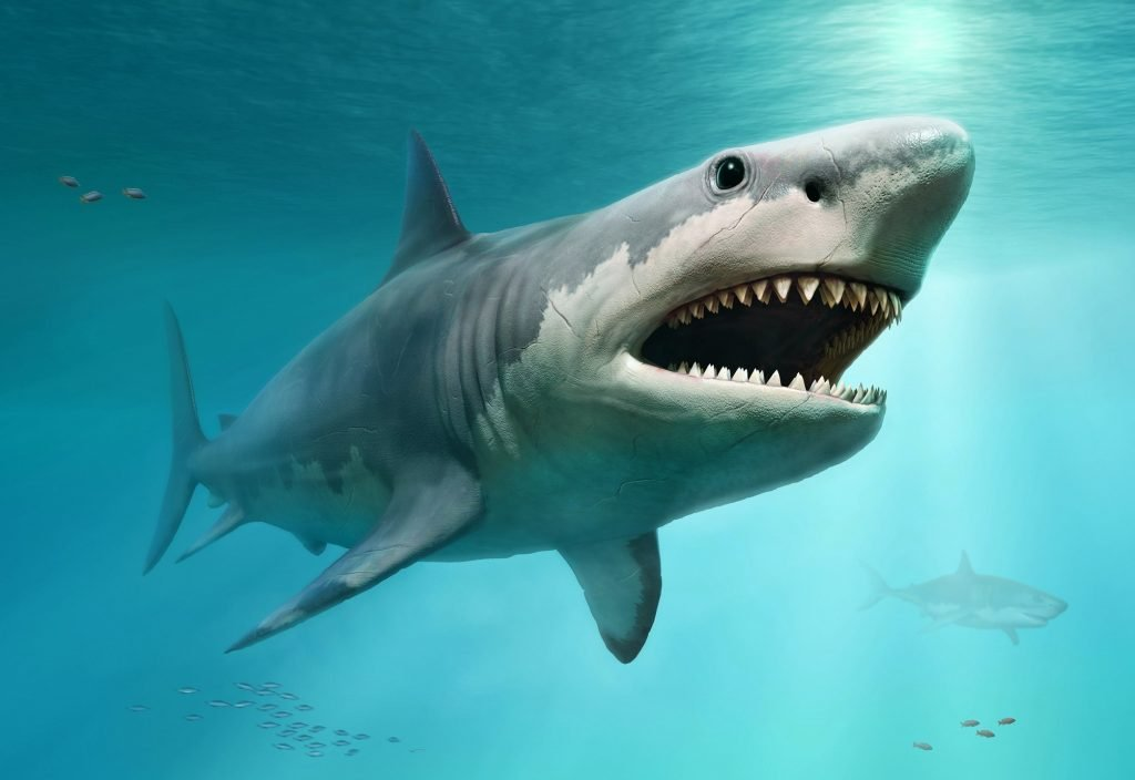 <p>Megalodons dominated the oceans between 15m and 3.6m years ago</p>