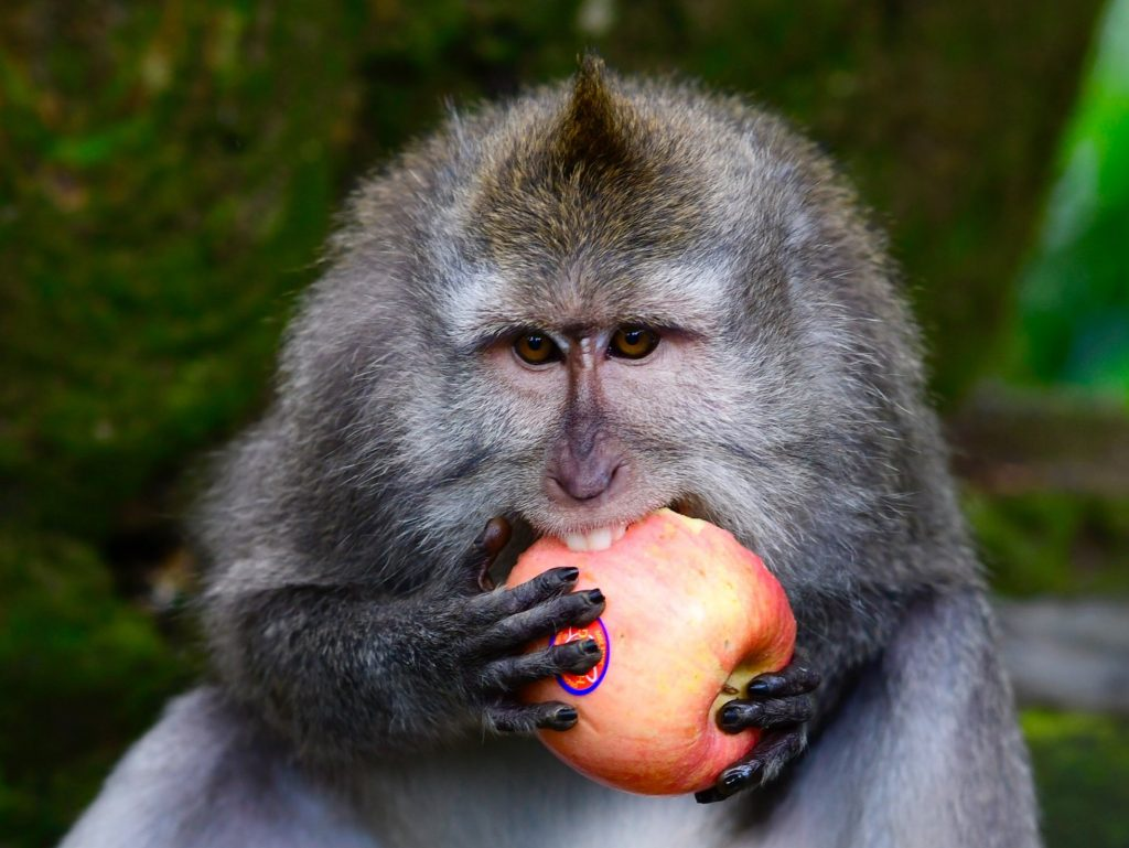Macaques had a preference for which reward they were given in exchange for valuables