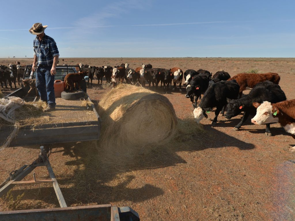 About 40 per cent of world grain harvests are fed to farmed animals, it's estimated